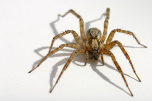 spider infestation control and removal toronto hamilton